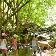 Balade en cours d'eau, forêt des Cévennes